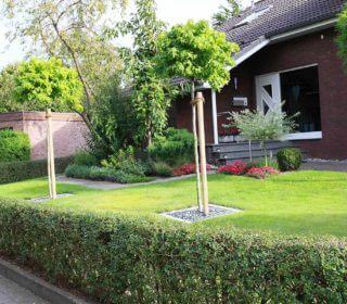 Vorgarten eines Klinkerhauses mit kleinen Bäumen und gepflegtem Rasen