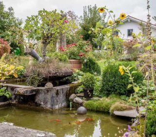 Koiteich mit wild-romantischer Gartengestaltung