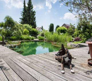 Schwimmteich mit Uferbepflanzung