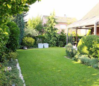 Rasenfläche mit Mähroboter