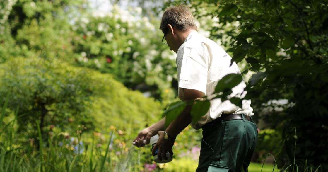 galanet-meister-duengen-pflanzen