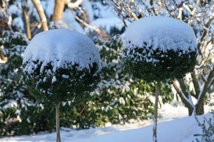 Winter-grillen - Tipps Und Rezepte Im Galanet-blog Gartentipps Winter Beachten
