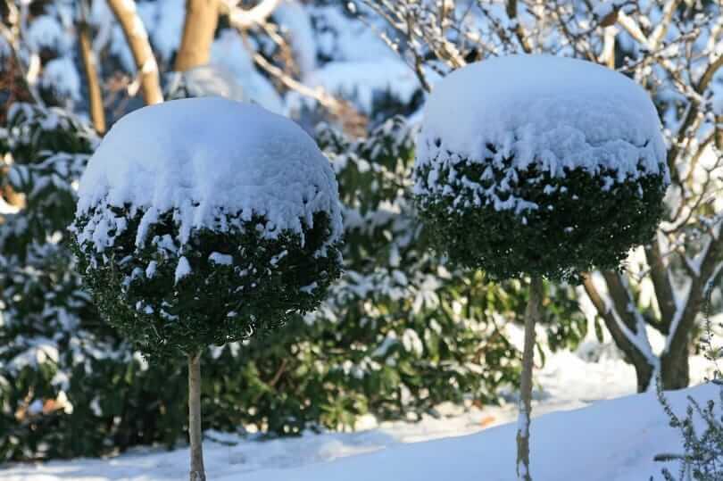 Schnee im Park