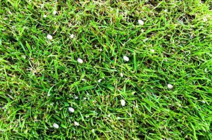 Rasen mit Dnger