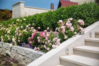 hecken pflanzen im herbst muss nicht sein galanet. Black Bedroom Furniture Sets. Home Design Ideas