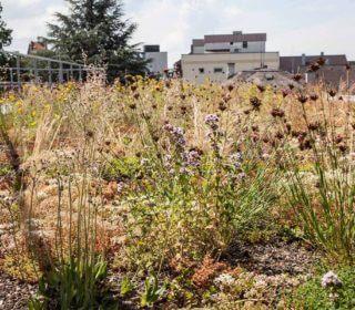 Pflanzen zur Dachbegrünung