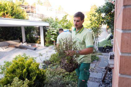 Pflanzen von Sträuchern - im Herbst am besten!