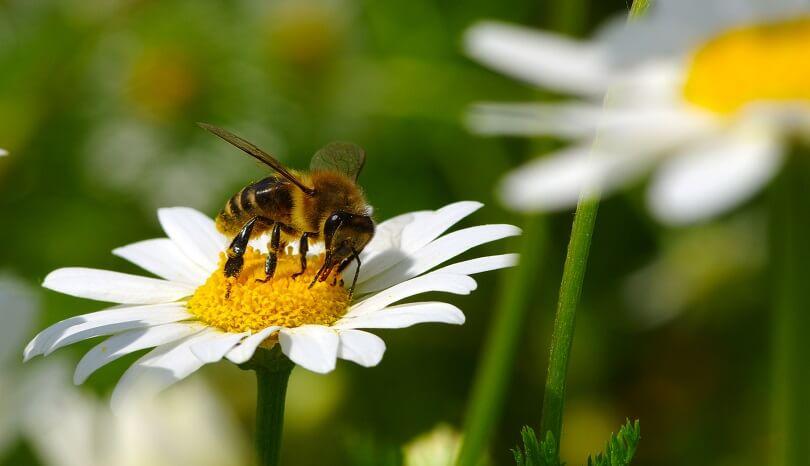 Biene auf einer Pflanze