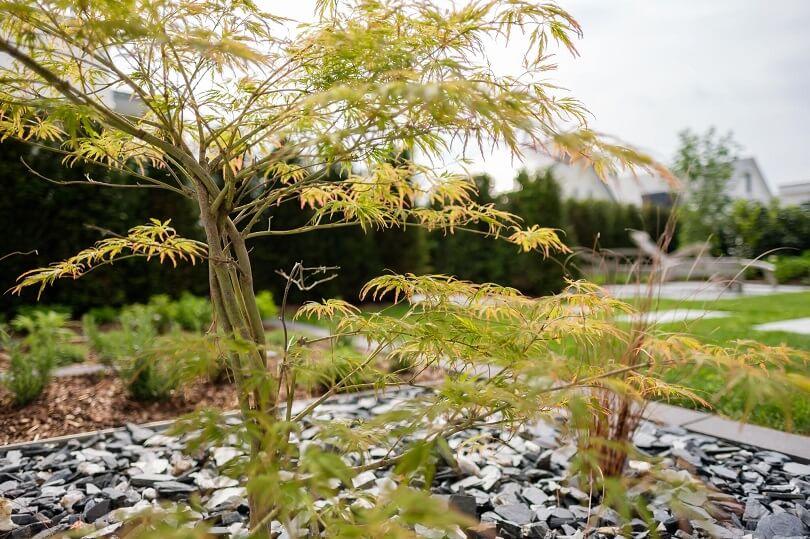 Kleinwüchsige Bäume machen jede Gartengestaltung spannender