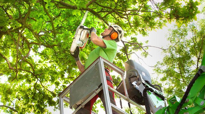 Kletterausrüstung Baumpflege : Fachgerechte baumpflege von galanet experten