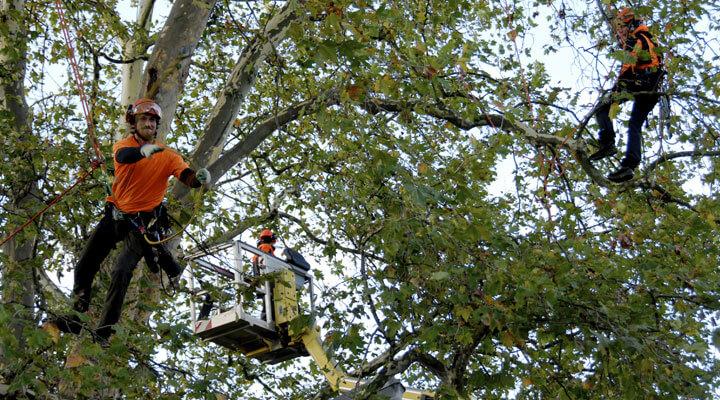 Kletterausrüstung Baum : Fachgerechte baumpflege von galanet experten