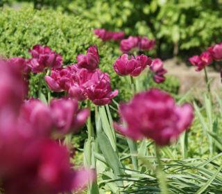 Frühlingsbepflanzung im Garten