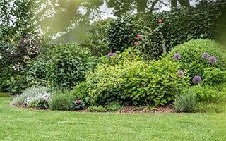 Hoher Sichtschutz im Garten