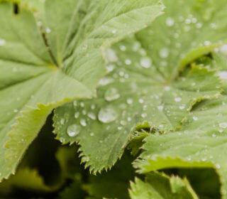 Regenwassermanagement