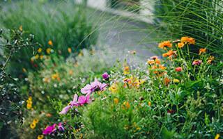Sich selbst erneuernde Bepflanzung durch Insekten-Pflanzen-Symbiose