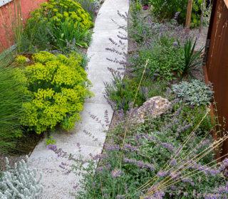 Pflanzen für Steingärten