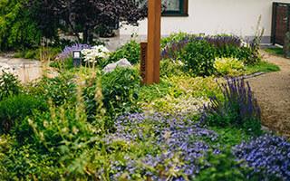 Attraktive Optik: ein robustes Blütenmeer in Ihrem Garten