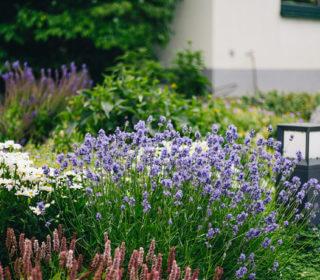 Insektenfreundlicher Garten